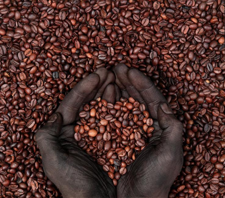 Where Can You Get Green Coffee Bean Diet Gnc Green Coffee Diets